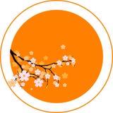 orientaliskt Cherry royaltyfria foton
