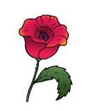 Orientalny czerwony maczek Obrazy Royalty Free