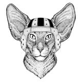 Orientalny kot z dużym ucho dzikim zwierzęciem jest ubranym rugby hełma sporta ilustrację Zdjęcie Royalty Free