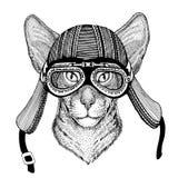 Orientalny kot z dużymi ucho Wręcza patroszonego wizerunek zwierzęcy jest ubranym motocyklu hełm dla koszulki, tatuaż, emblemat,  Zdjęcia Stock