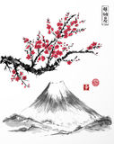 Orientalny Sakura czereśniowy drzewo w okwitnięciu i Fujiyama górze na białym tle Zawiera hieroglify - zen, wolność Obrazy Royalty Free