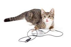 Orientation de chat à la souris d'ordinateur photo stock