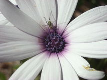 Orientation sur la beauté de la nature Photographie stock