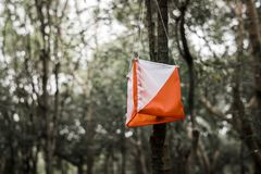 Orienteering box outdoor in a forest. Hanging from a tree Stock Photography