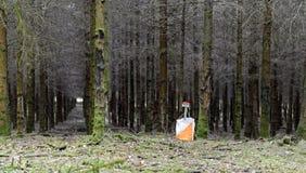 Orienteering control. In the ardennen forests in Belgium Stock Image