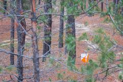 Orienteering. Control point Prism and composter for orienteering in the autumn forest.  Stock Image