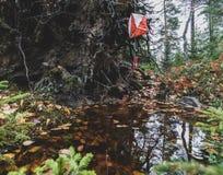 Orienteering kontrola w lasowym obwieszeniu nad wodna kałuża obrazy royalty free