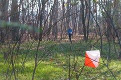 Orienteeringscompetities op beboste gebieden De atleet nadert de controlepost stock foto