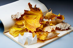 Origami and autumn leaves Royalty Free Stock Photo