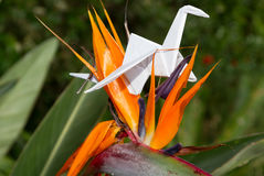 Origami crane in plant nature setting Stock Photos