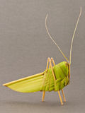 Origami grasshopper palm tree leafs Royalty Free Stock Photo