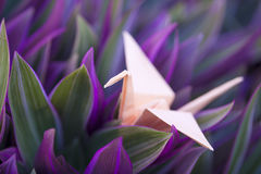 Origami paper crane in colorful foliage. Of Tradescantia spathacea royalty free stock image