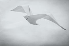 Origami paper seagull bird Royalty Free Stock Photos