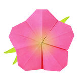 Origami pink flower Royalty Free Stock Photography