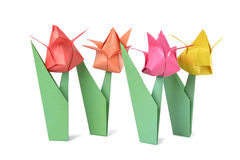 Origami tulip isolated over white Stock Images
