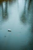 Origamiboot op nat asfalt tijdens regen Royalty-vrije Stock Fotografie
