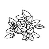 Origan d'illustration de dessin de dessin à main levée Photos libres de droits