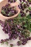 Origan (Origanum vulgare) Royalty Free Stock Image