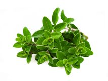 Origanum majorana Stock Photos