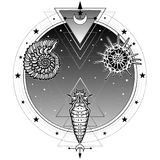 Origin of life: shell, radiolaria, larva. Background - a circle of the night star sky. Alchemy, magic, esoteric, occultism. Vector illustration isolated on a Royalty Free Stock Images