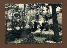 Original 1950 antique photo-gardeners Stock Photography