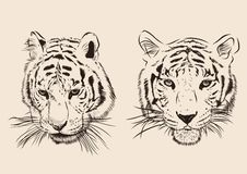 Original artwork tiger with dark stripes, isolated Royalty Free Stock Image