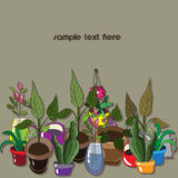 Original background with household plants Stock Images