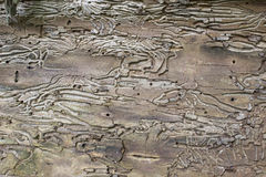 Original bark pattern. Original inner bark pattern. Rough surface with multiple lines in the bark of an old dry tree Stock Image