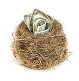 Original bird's nest with dollar bills. New business starting by banknotes. Business concept. Royalty Free Stock Image