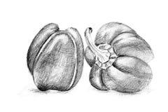 Original- blyertspennateckning vid pepparen Royaltyfri Fotografi