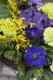 The original bouquet of blue anemones, carnations, forsythia stands in a glass vase. Original bouquet of flowers of blue anemones, carnations, forsythia with Stock Photography