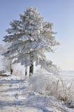 Original christmas tree Royalty Free Stock Photo