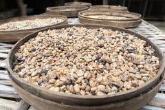Original coffee bean in Bali Stock Images