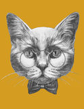 Original drawing of Cat with glasses and bow tie. Isolated on colored background Royalty Free Stock Photo