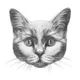 Original drawing of Cat. Isolated on white background Royalty Free Stock Photography