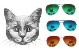 Original drawing of Cat with mirror sunglasses. On white background Royalty Free Stock Photos