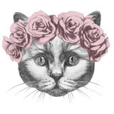 Original drawing of Cat with roses. Isolated on white background Stock Image