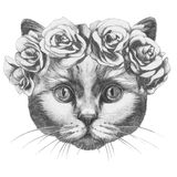 Original drawing of Cat with roses. Isolated on white background Stock Photo