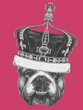 Original drawing of English Bulldog with crown. Stock Photos