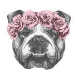 Original drawing of English Bulldog with floral head wreath. On white background Royalty Free Stock Images