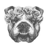 Original drawing of English Bulldog with floral head wreath. On white background Royalty Free Stock Image