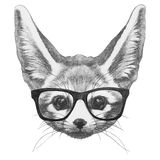 Original drawing of Fennec Fox with glasses. Isolated on white background Stock Photos