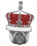Original drawing of French Bulldog with crown. Isolated on white background Stock Image