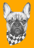 Original drawing of French Bulldog with scarf. Isolated on colored background Royalty Free Stock Photos
