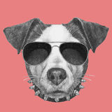 Original drawing of Jack Russell with collar and sunglasses. Isolated on colored background Stock Images