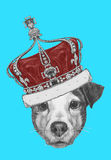 Original drawing of Jack Russell with crown. Stock Image