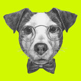 Original drawing of Jack Russell with glasses and bow tie. Isolated on colored background Royalty Free Stock Photography