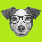 Original drawing of Jack Russell with glasses. Isolated on colored background Royalty Free Stock Photos