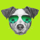 Original drawing of Jack Russell with mirror sunglasses. On white background Royalty Free Stock Photo