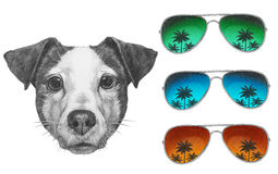 Original drawing of Jack Russell with mirror sunglasses. Royalty Free Stock Photos
